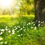 Laat de natuur een handje helpen